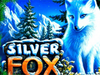 Silver Fox в казино